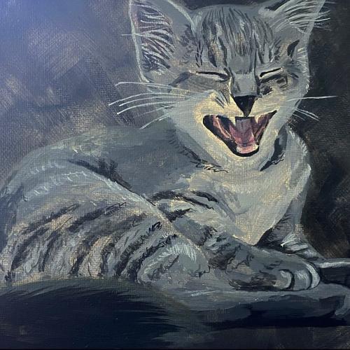 kitten pet portrait