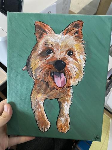 Yorkie Dog Pet Portrait