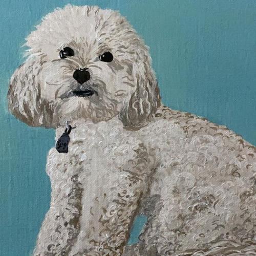 Gigi poodle portrait